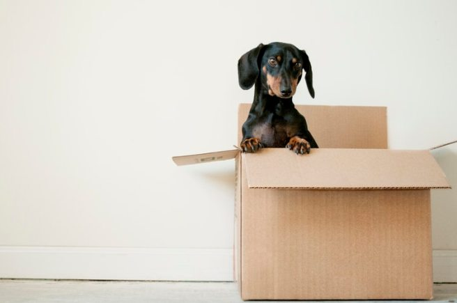 Advice to make moving house less stressful