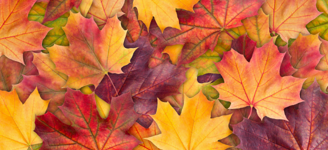 how to stay healthy in the autumn tips