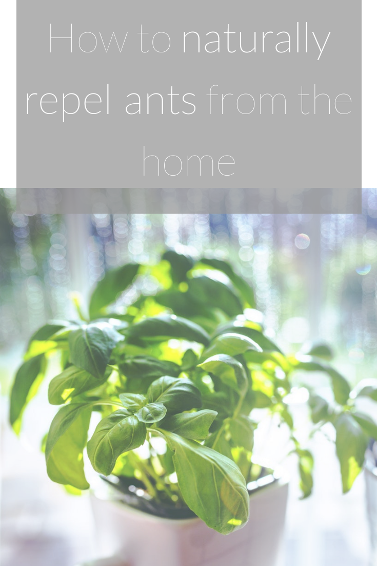 How to naturally repel ants from the home.png