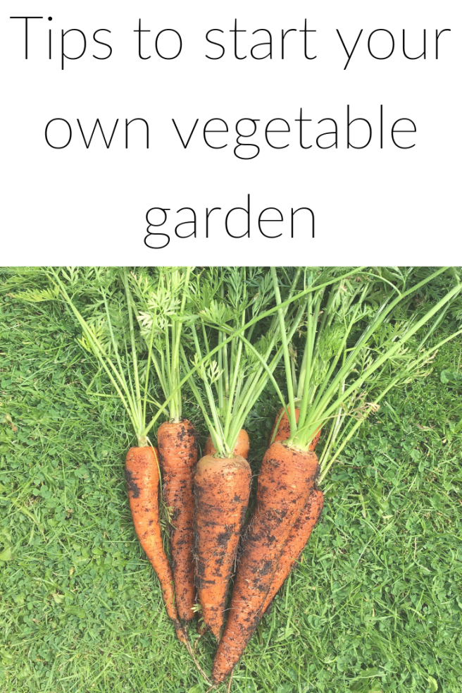 Tips to start your own vegetable garden.png
