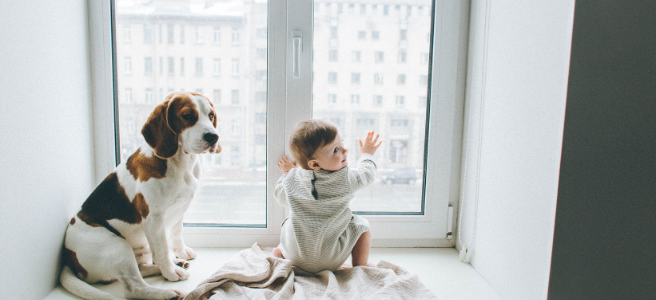 Making your home baby and pet proof